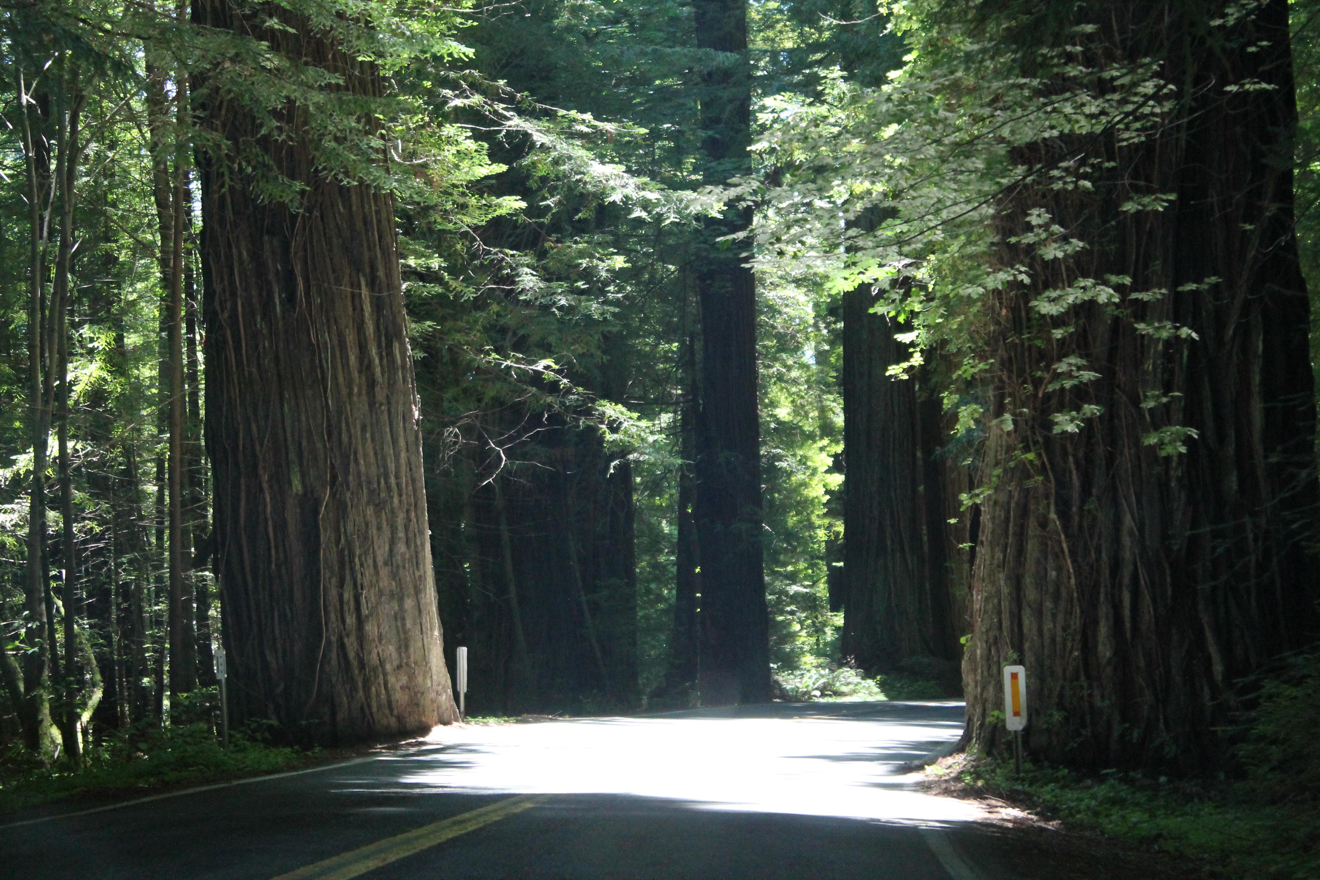 Chandelier tree drivenfordrives img4348 arubaitofo Images